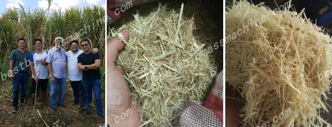 material for elephant grass pellet plant